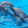 nager-avec-les-dauphins-sport-decouverte