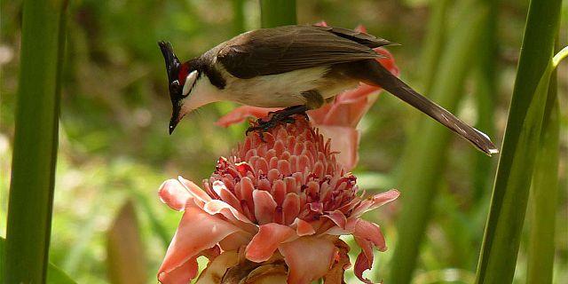 4-pamplemousses-botanical-garnde-mauritius