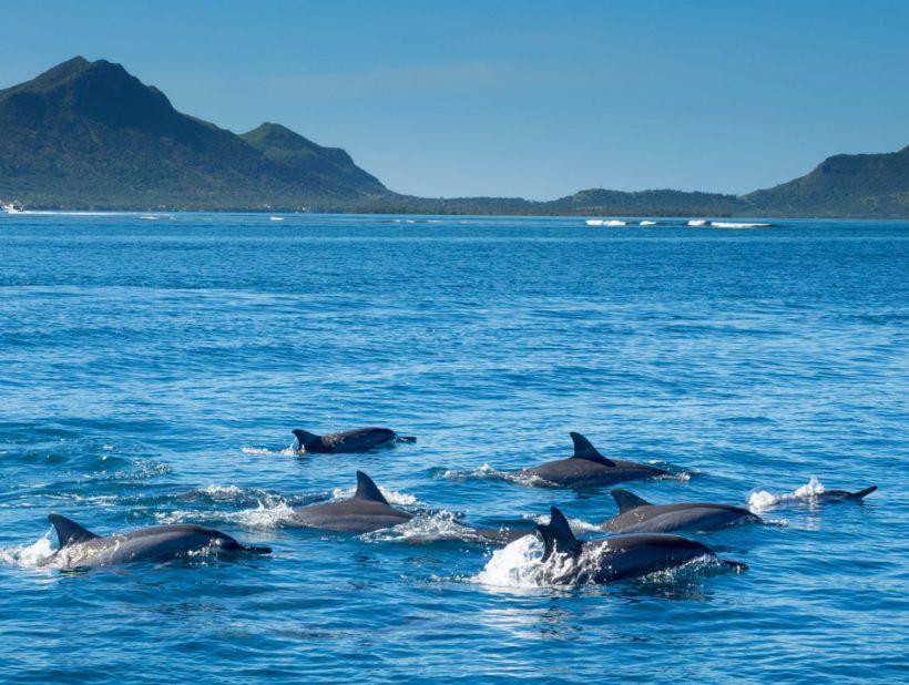 DolphinsTamarin