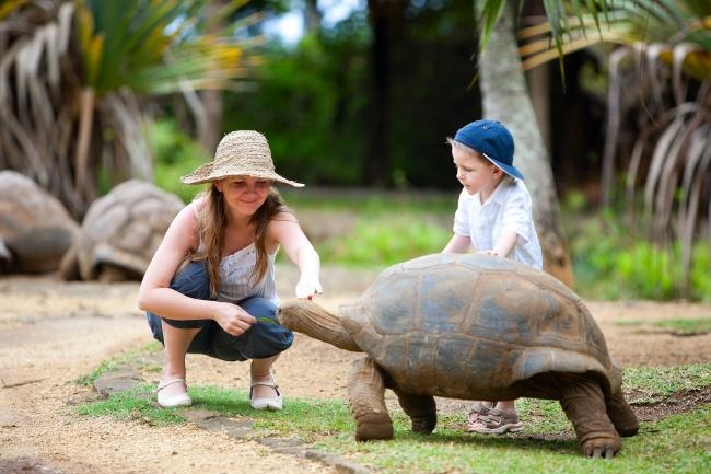 Feeding Giant Turtle