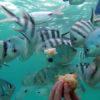 undersea-walk1